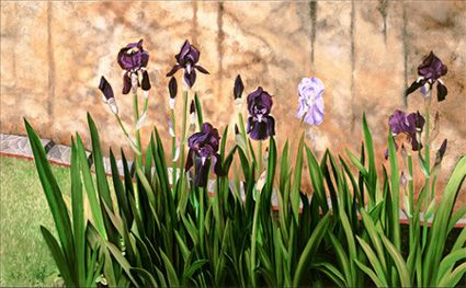 Iris Garden by Matthew Bates