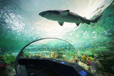 Dangerous Lagoon at Ripleys Aquarium of Canada http://www.torontonicity.com/2013/10/16/ripleys-aquarium-canada-now-open-in-toronto/