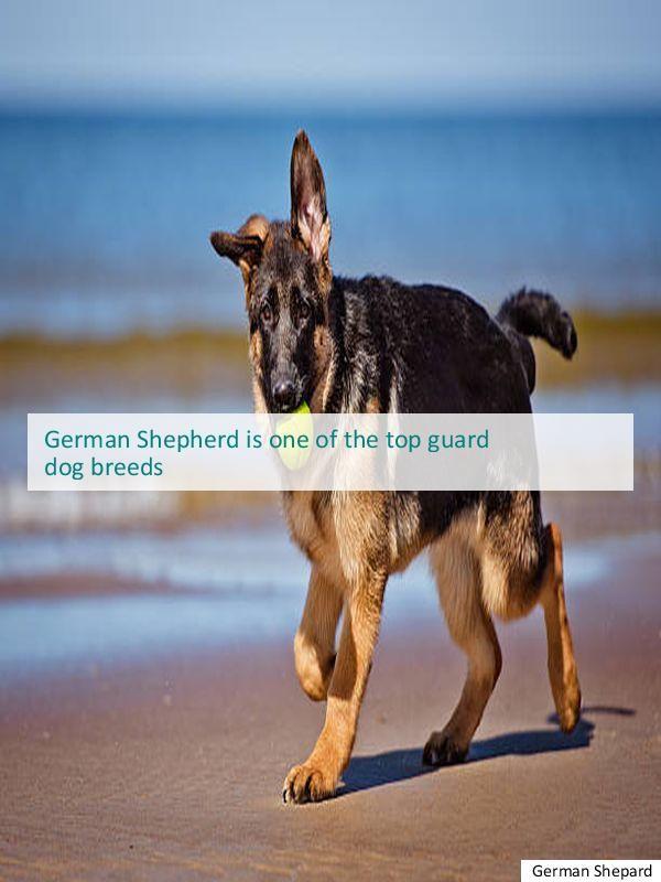 You Need A German Shepherd Rescue California White German
