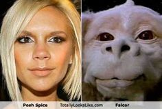 funny celebrity pic - Google Search