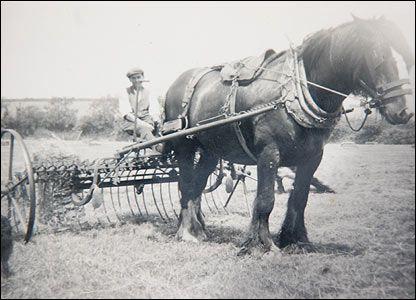 raking hay