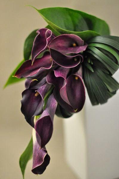 27 besten pflanzen bilder auf pinterest. Black Bedroom Furniture Sets. Home Design Ideas