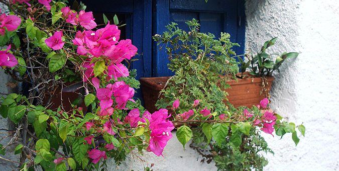 Τα 10 ωραιότερα μέρη στην Αθήνα: Λουλουδιασμένα μπαλκόνια και περβάζια στα Αναφιώτικα