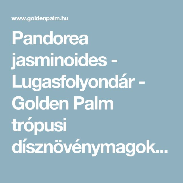 Pandorea jasminoides - Lugasfolyondár - Golden Palm trópusi dísznövénymagok forgalmazása - pálmamag, banánmag, cycasmag, yukkamag, agavemag, aloemag, pandanusmag, palm seeds, banana seeds, cycad seeds, yucca seeds, agave seeds, aloe seeds