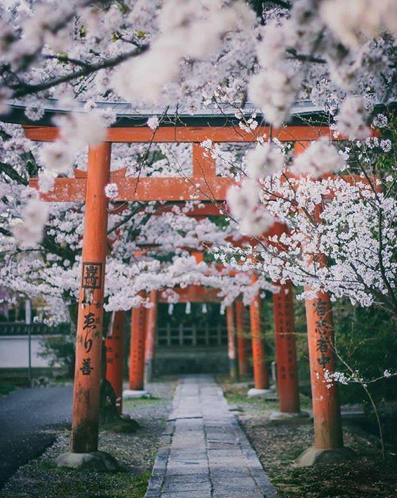 Takenaka Inari Shrine /// 吉田神社 #Kyoto ▼ …
