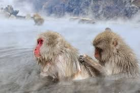 Image result for Jigokudani Monkey Park