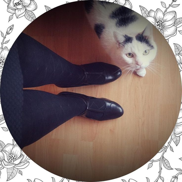 Hello beauty  | #outfit #outfitoftheday #cat #cats #ootd #dutch #love #home #sweet #cutecat #cute