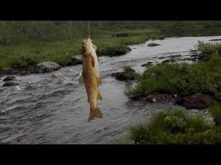 спортивная рыбалка на форель в ручье https://www.youtube.com/watch?v=CVkZQHzE22M