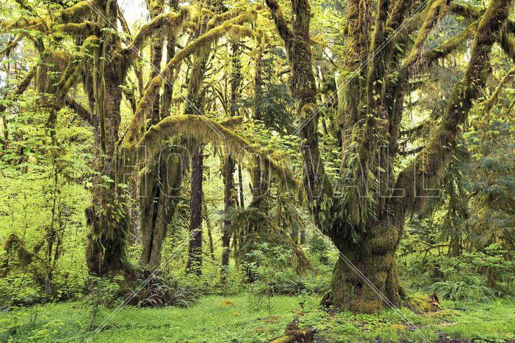 Rain Forest - Fototapeter & Tapeter - Photowall