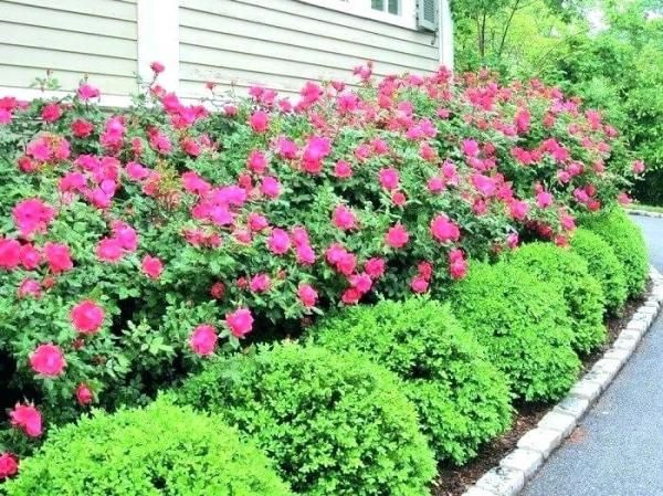 Image result for When can I plant in Zone 9b? | Front yard ...