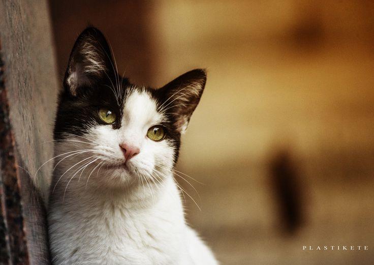 "Nostalgic cat ""Niko"" by Plastikete  on 500px"