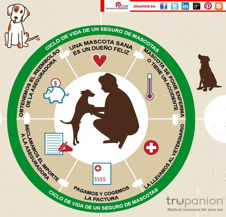 ¿Conocéis el ciclo de vida de un seguro de #mascotas?  Desde SegurosVeterinarios.com os dejamos un breve resumen.