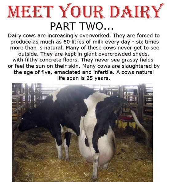 Meet your dairy, part 2