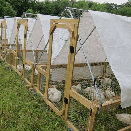 Stress Free Chicken Tractor Plans Ebook Meyer Hatchery Farm Stuff Pinterest The Chicken