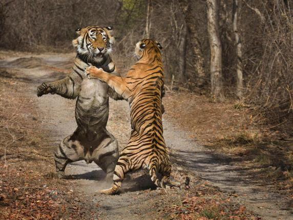 award winning nature photography - Google Search