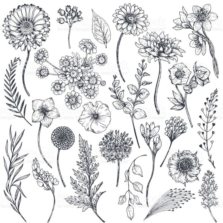 Set of illustrations of plants. Sketch. Freehand drawing. | Vector ...