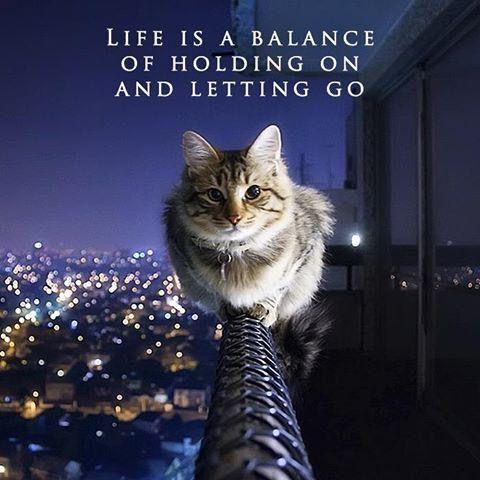"""Bilge bir kedi der ki: """"Hayat, sıkıca tutunmak ve öylece bırakmak arasındaki dengedir."""" İyi geceler:)"""