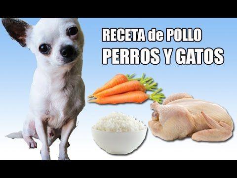 Comida CASERA para PERROS Y GATOS. Receta de pollo y verduras! :) (cocinado) - YouTube