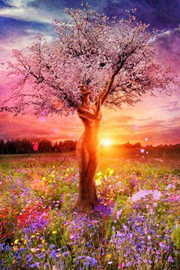"""""""Όπως μού """"έστρωσαν"""".... ξαγρυπνάω"""".: Ωραίες φώτο με λουλούδια και δέντρα"""