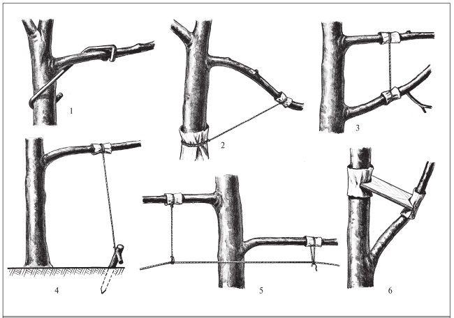 фруктовый сад подрезка деревьев: 19 тыс изображений найдено в Яндекс.Картинках