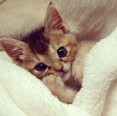 Tucked in