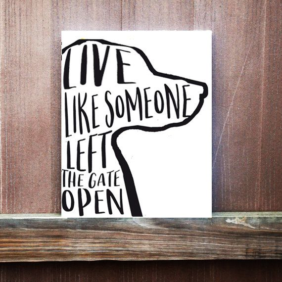 Live Like Someone Left The Gate Open Quote: 22460 Besten {GROUP} Chihuahuas