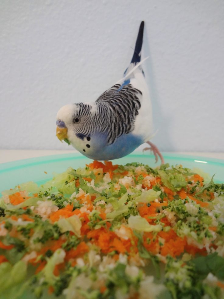 Best Foods to Feed Your Pet Budgie