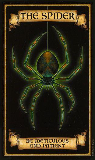Oraculo Madame Endora: La Araña - La magia del Tarot