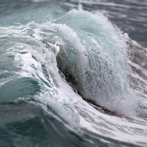 :  Gray Whales, Real Life, Beaches Life, The Ocean, Ocean Waves,  Eschrichtius Robustus, Color Purple,  Eschrichtius Gibbosus,  Devilfish