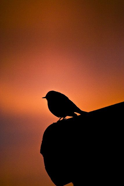Bird at Dawn | Flickr – Compartilhamento de fotos!