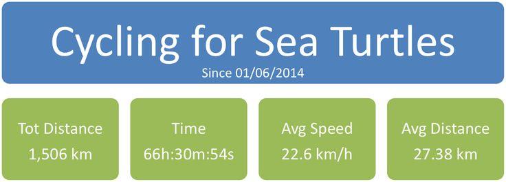 Red Sea Turtle Project - UK: MARCO GIOVANNINI - PADI CD 619790 - UK: 1506 Km #f...
