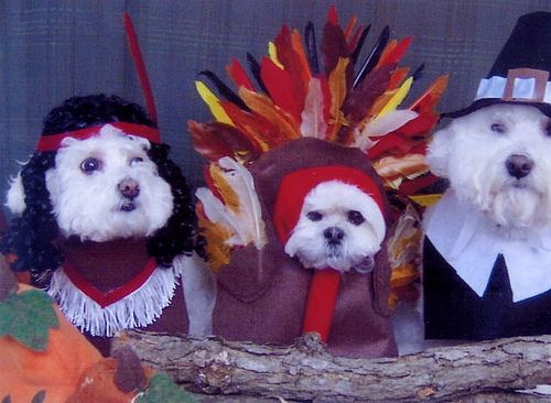 23 Animals Who Are Not Enjoying Thanksgiving Https Www