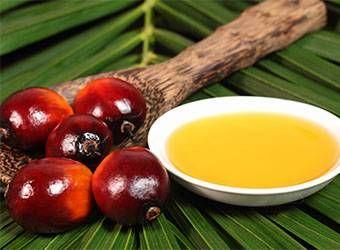 Aceite de Palma, Peligro para la Salud y el Medio Ambiente