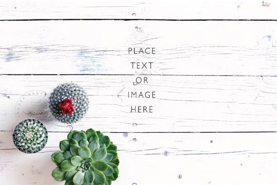 Styled Desktop | Succulent on white wood floor | Styled photography | website banner