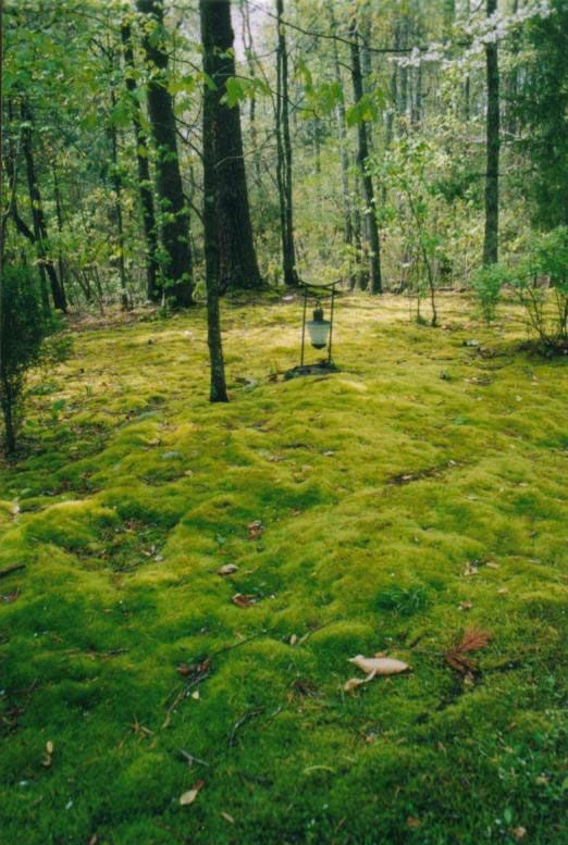how to get moss out of yard