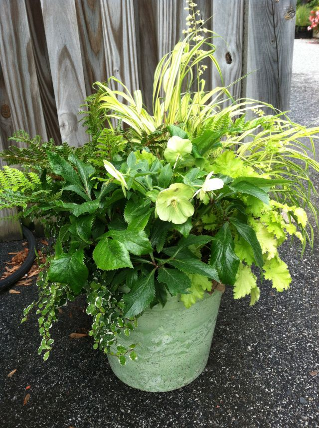 Containers With Pizzazz   Not Your Ordinary Container 342 best Shade Container Gardening images on Pinterest   Potted  . Gallery Of Beautiful Container Garden Ideas. Home Design Ideas