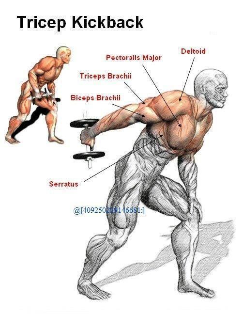 16 best images about Tricep Exercises on Pinterest ...