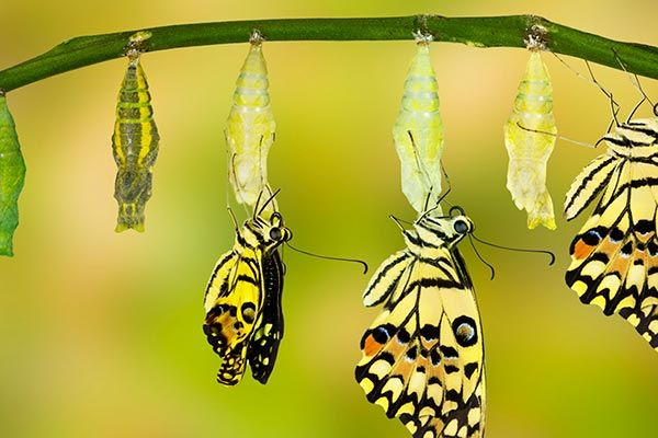 Setting your intention to cope with change - A free guided #meditation for coping   via @ParkviewHealth