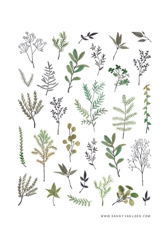 Botanical illustration by Sanny van Loon | plants | herbs | twigs | flora | pattern | watercolor