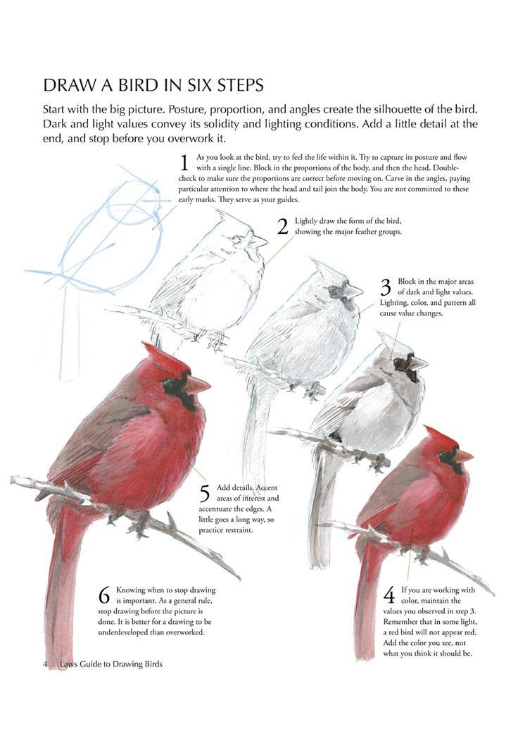Draw a bird in 6 steps (http://www.audubonmagazine.org/articles/living/how-draw-bird#.UJFpmP_w1lg.pinterest)