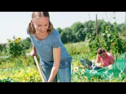 17 Best Images About Obst Und Gemüse On Pinterest   Gardens ... Gartnern Fur Anfanger