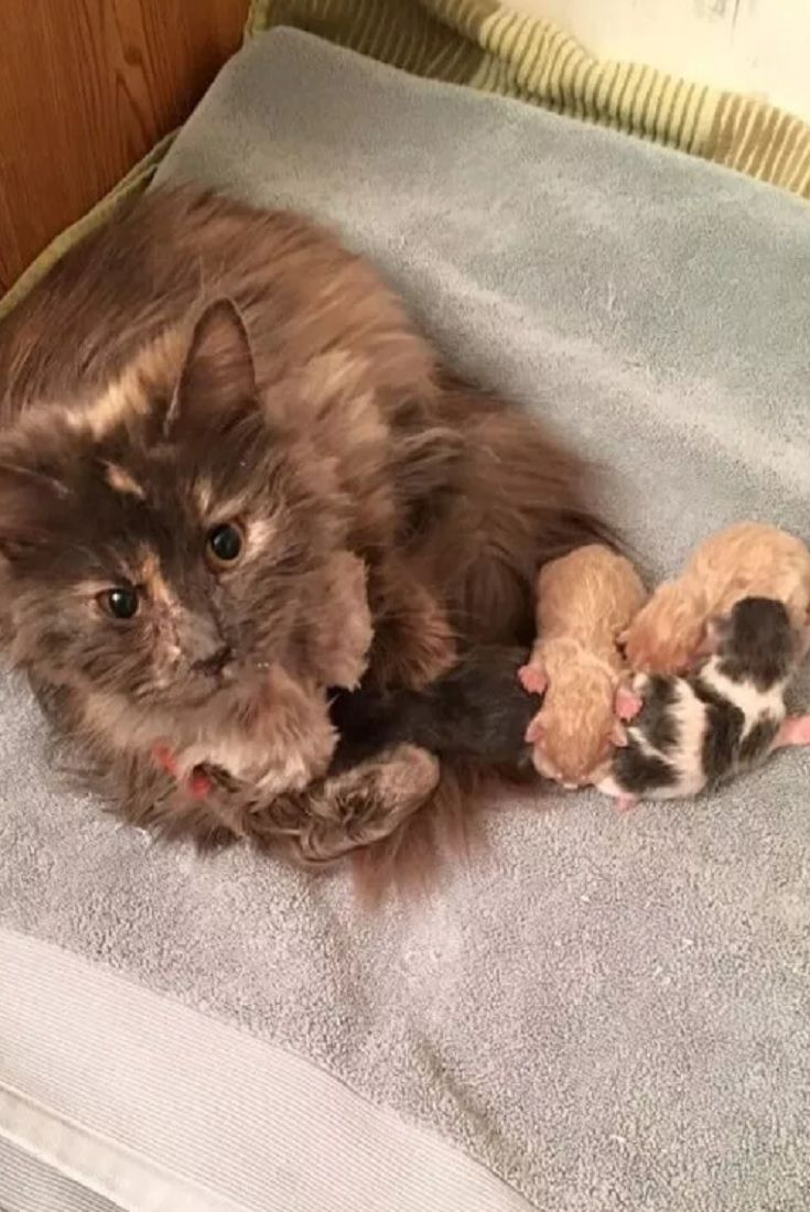 Cat Starts Eating Again When She Got Her Babies By Her Side Cat Kitty Pets Animals Babies Cat Facts Cats Cat Mom