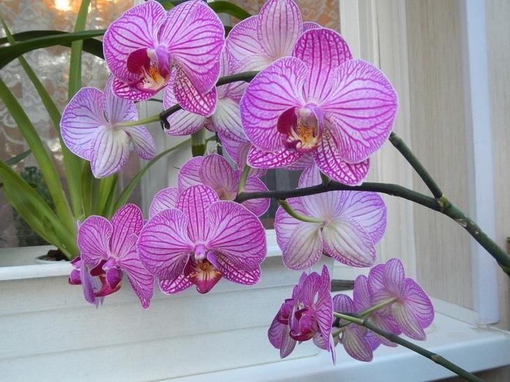 Орхидея нуждается в круглогодичном уходе. Речь идет не только о поливе и удобрениях. Посмотрите, как нужно ухаживать за орхидеями в зависимости от поры года.Январь Полив фаленопсиса значительно уменьш...