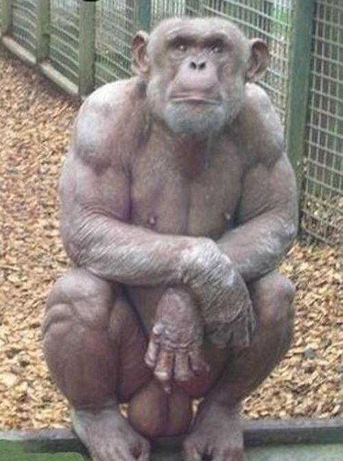 Hairless Chimps Are Scary!
