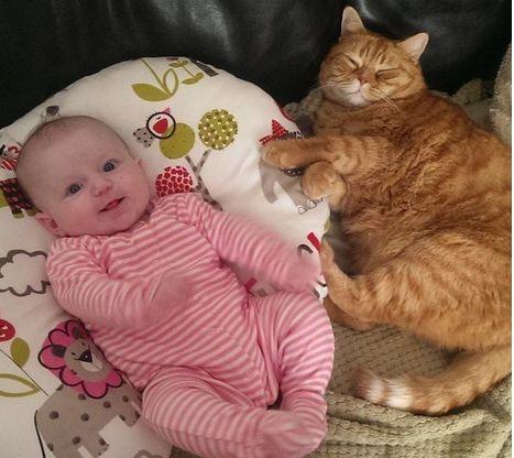 """Gatti babysitter che accudiscono e fanno compagnia ai bimbi.Gatti babysitter: 30 """"mamme"""" a quattro zampe per cuccioli umani FOTO"""