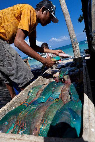 Fishes, Tanah Beru