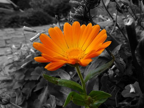 Black and white photography with color