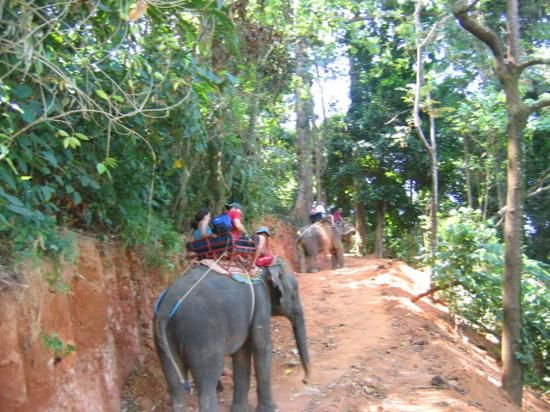 Sea turtles, elephants and rafting phuket