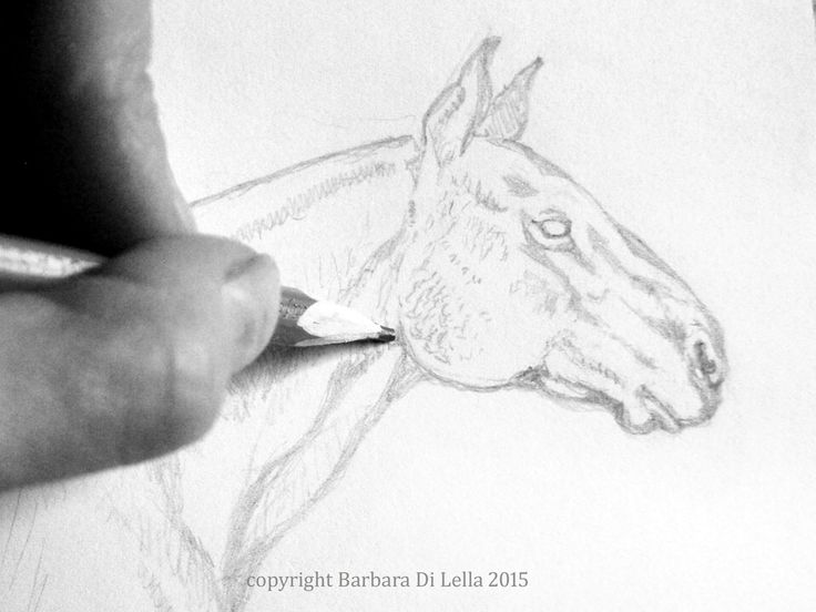 pencil drawing of a horse #pencildrawing #handdrawn #horse #equine