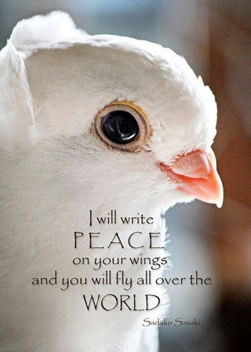 World Peace                                                                                                                                                      More